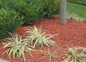 Shredded wood used as mulch. This type of mulc...