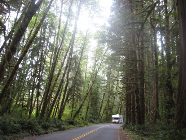 Edwards Meadow Fan Art Forks Washington Pictures The Hoh Forest