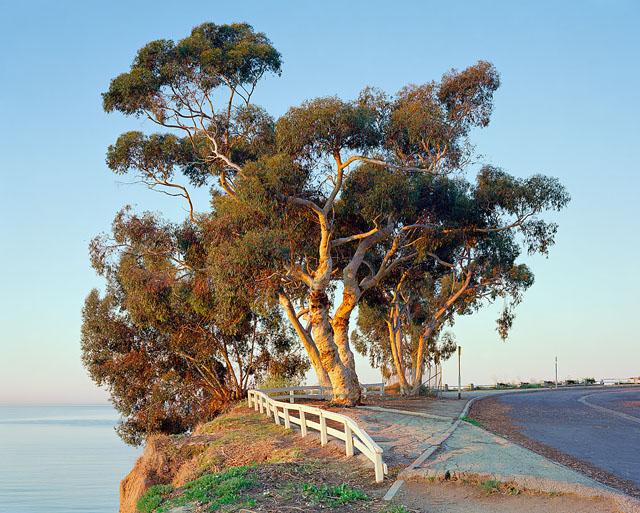 Edwin Beckenbach Photography Portfolio Eucalyptus I