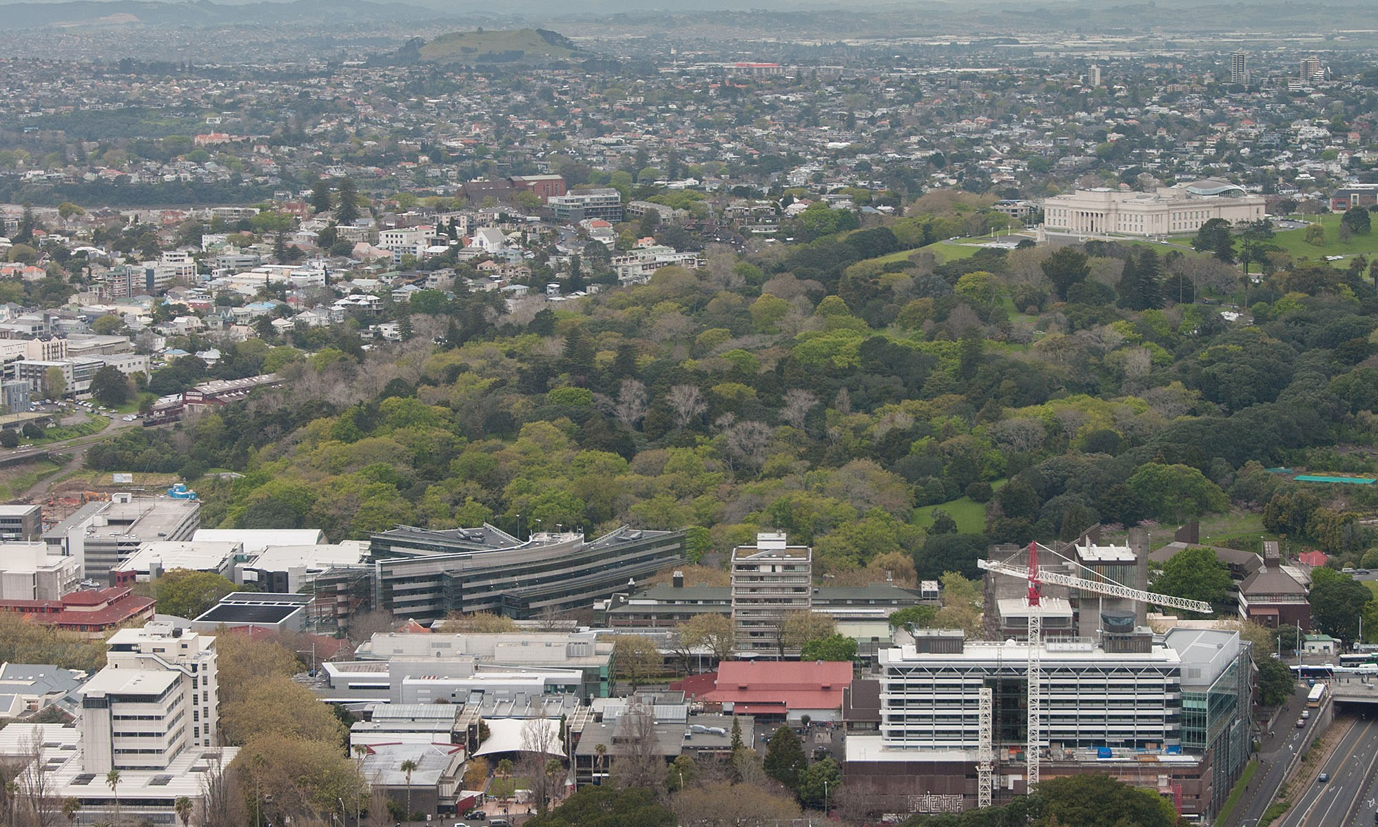 Auckland Domain from Sky Tower