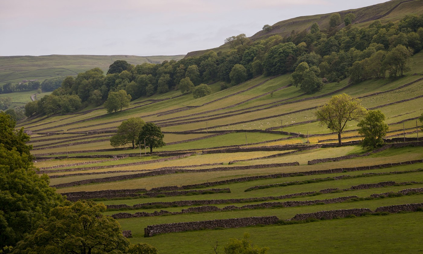 Dry Stone Walls pattern in Yorkshire Dales Landscape