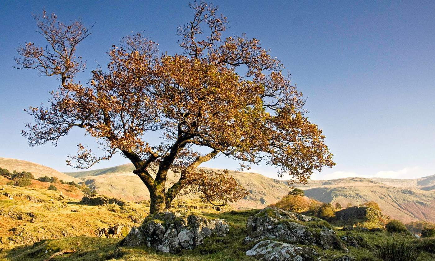 Autumn Tree in the Lake District
