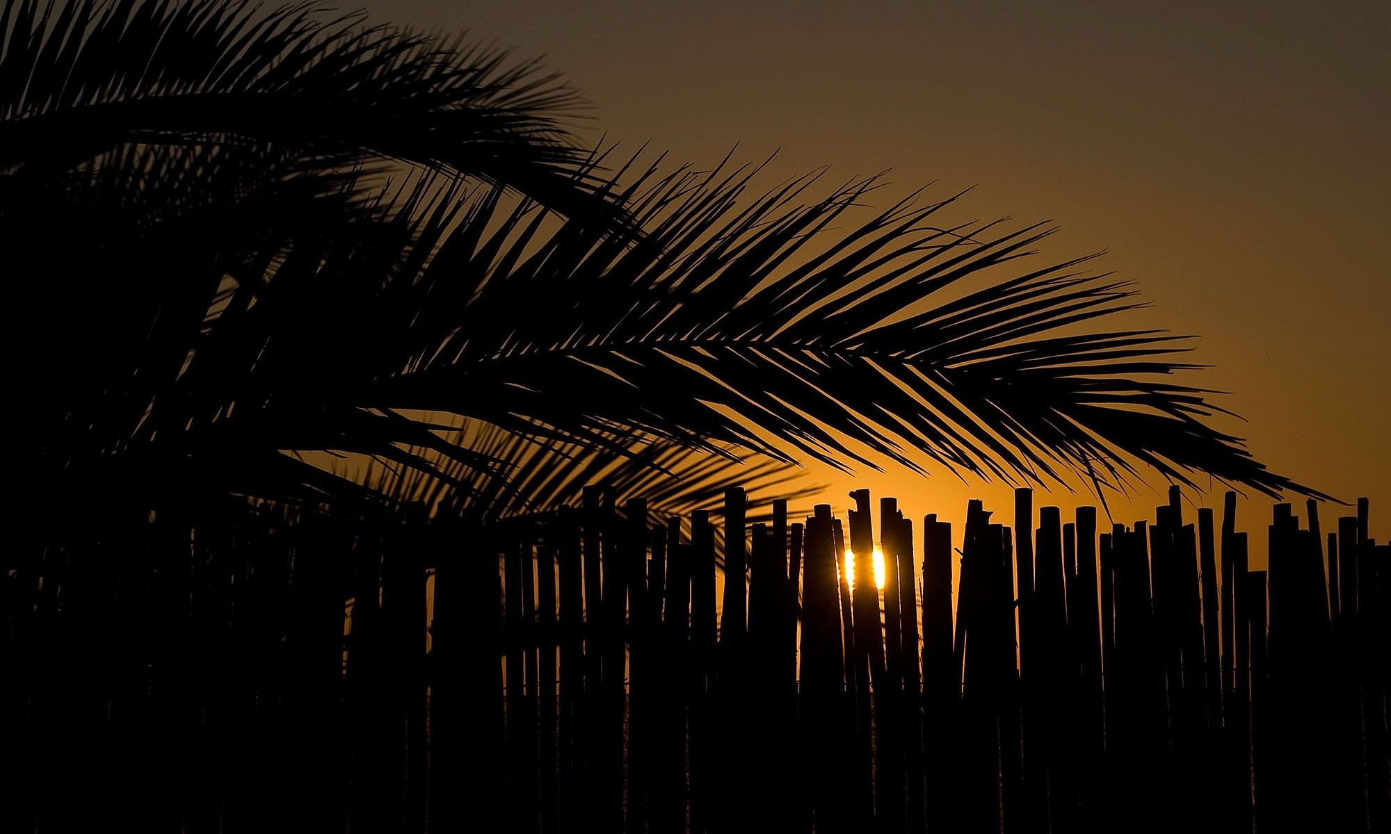 Sunrise behind Palm Trees