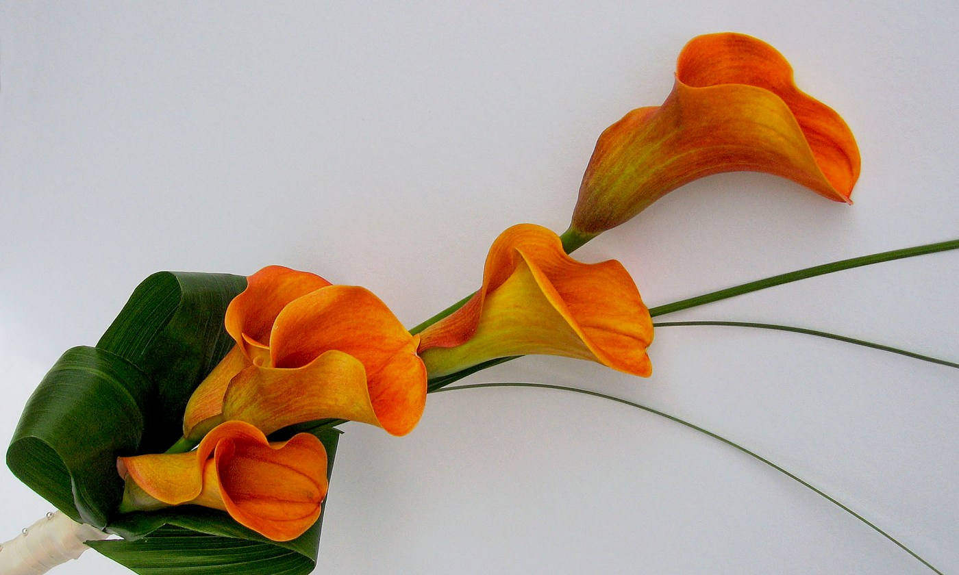 Bouquet of Orange Arum Lily Flowers