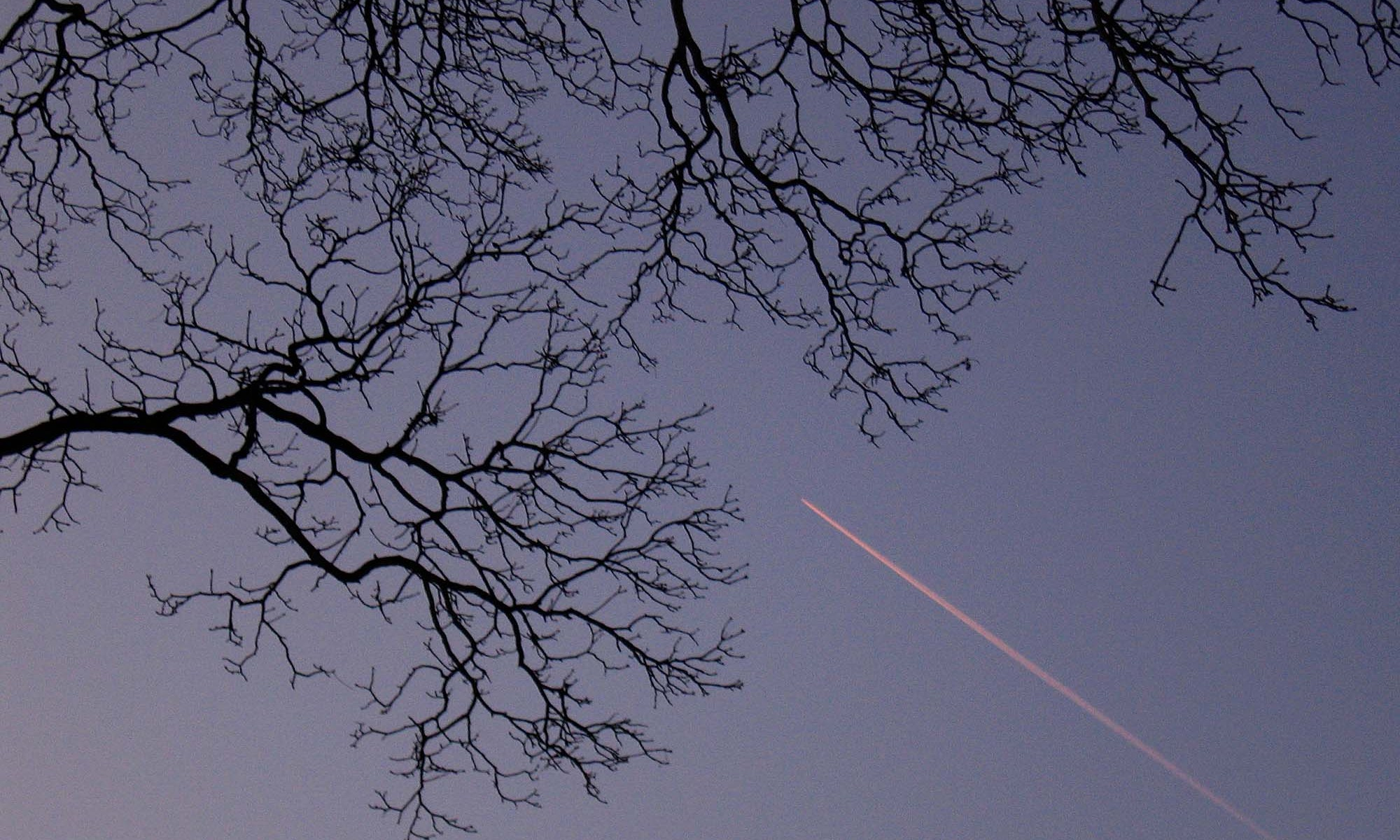 Tree Branch Patterns with Plane Trail