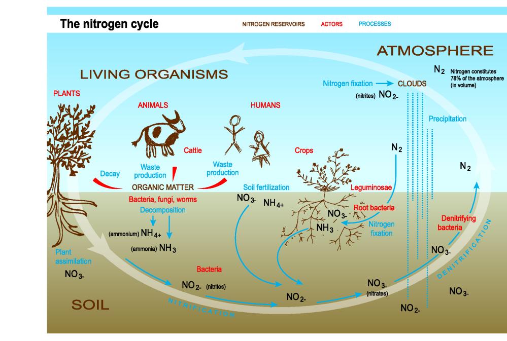 medium resolution of  trend10 2s nitrogen cycle eps 75dpi png 113 0 kb