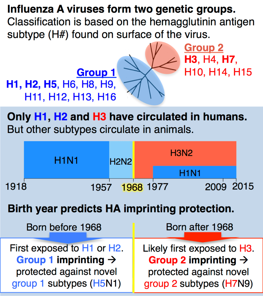 medium resolution of until recently a key idea in influenza epidemiology was that the entire human population would lack immunity against an animal origin pandemic virus