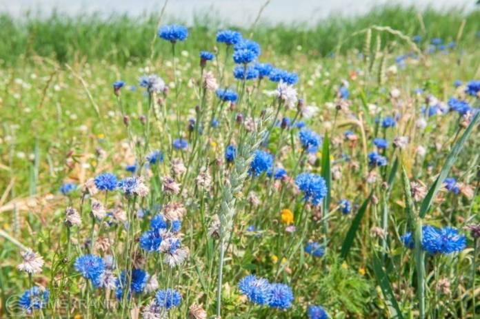 Geef uw mening over de natuur en het landschap in uw omgeving
