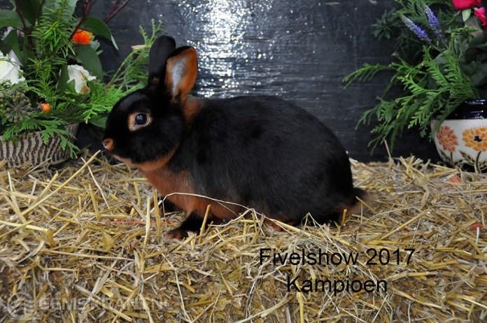 kleindierententoonstelling van P.K.V Fivelingo een succes