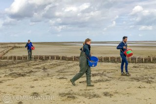 Onderzoekers zaaien Zeekraal in op pionierkwelder bij Delfzijl – Foto EcoShape (002)