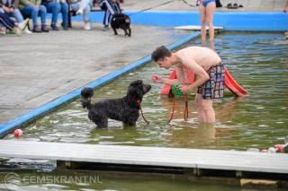 Honden zwemmen KP Zijlbad_0490