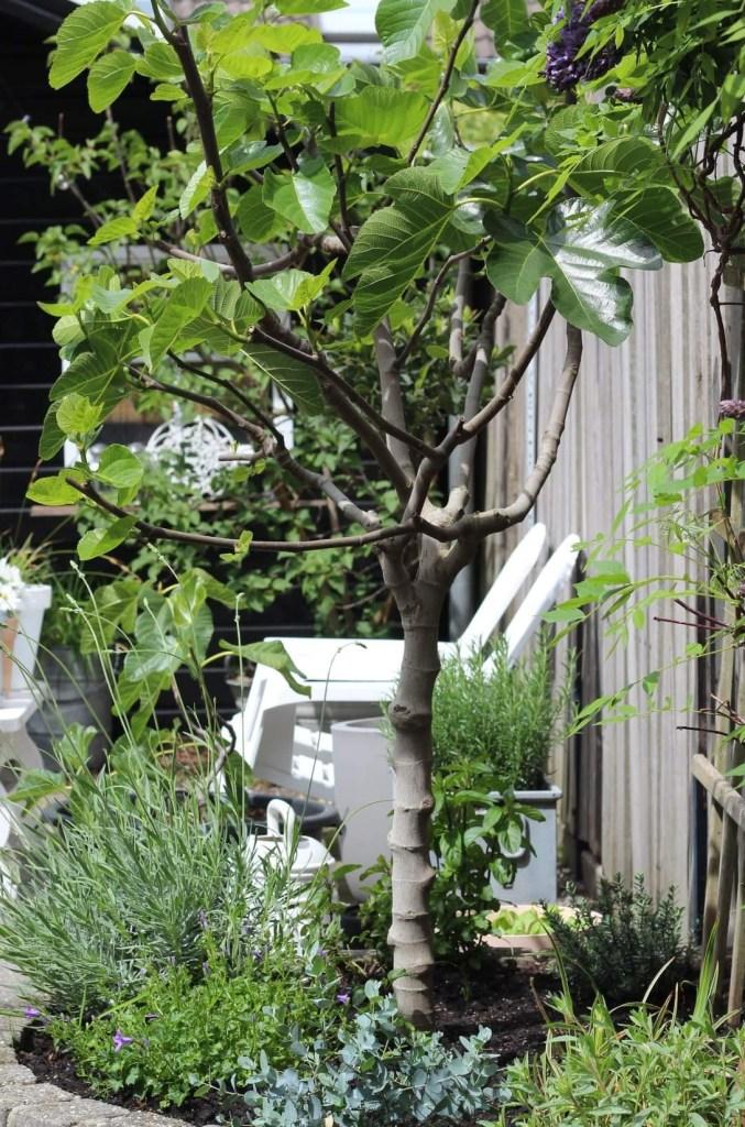 hittebestendige tuin