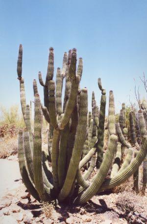 20010601 Tucson