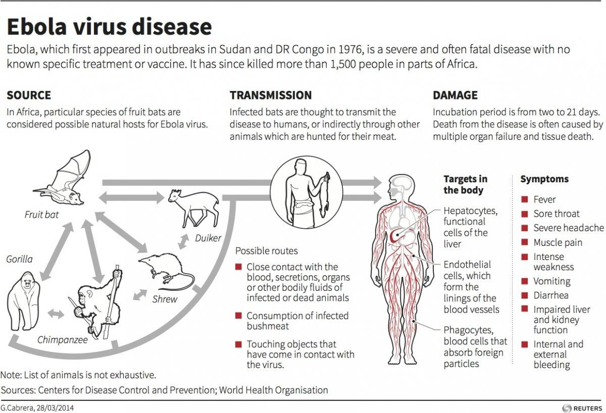 Monoclonal Antibo S For Ebola Virus