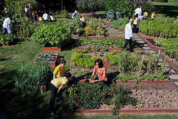 Urban Agriculture: Creating Healthy, Sustainable Communities in D.C. |  Article | EESI