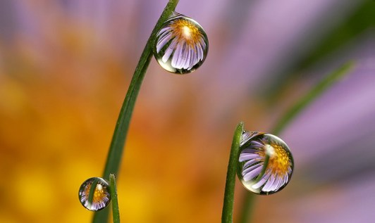 dewdrop-reflections