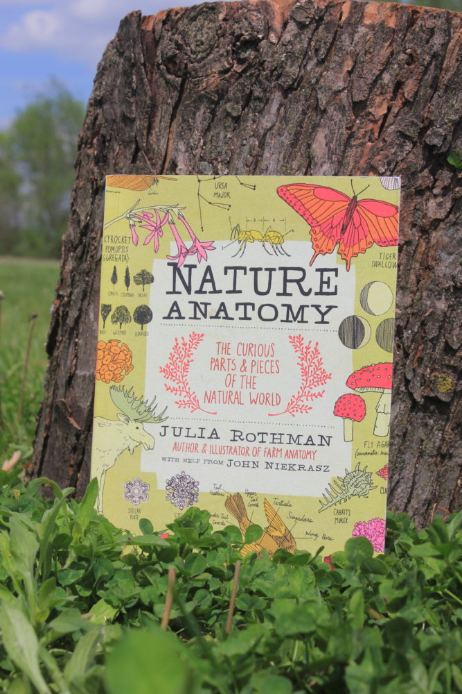 The Perfect Book for Curious Little Minds: Nature Anatomy Review ...