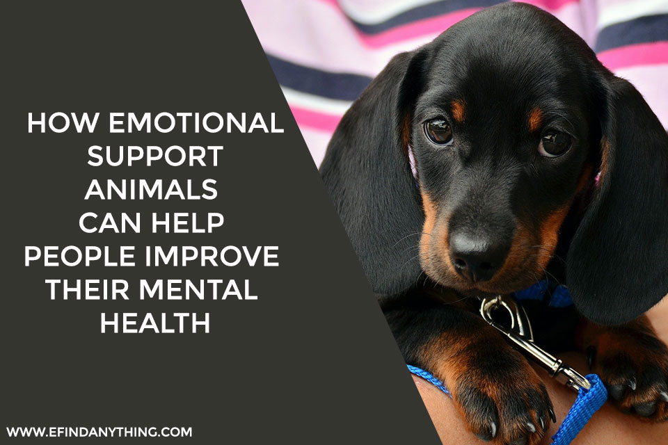 How Emotional Support Animals Can Help People Improve Their Mental Health