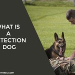 What is a Detection Dog