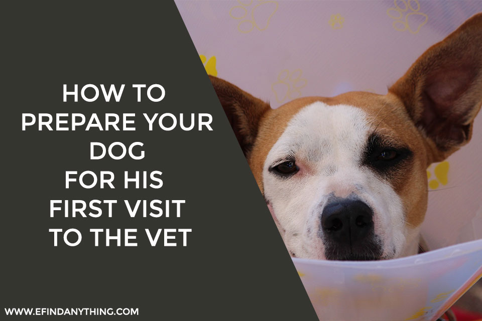 How to Prepare Your Dog for His First Visit to the Vet