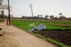 نداء الي كل مسؤول في كهرباء اسيوط|مصر اليوم العربية |