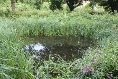 A propper pond