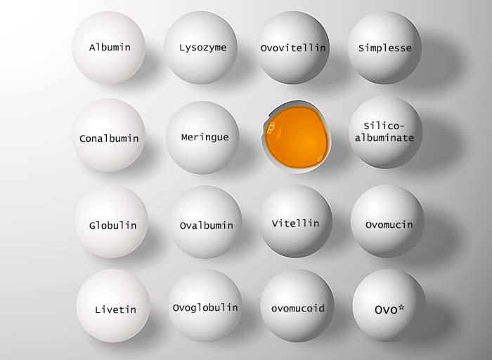 egg names other names