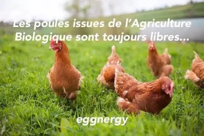 Poules libres car les élevages sont issus de l'Agriculture Biologique