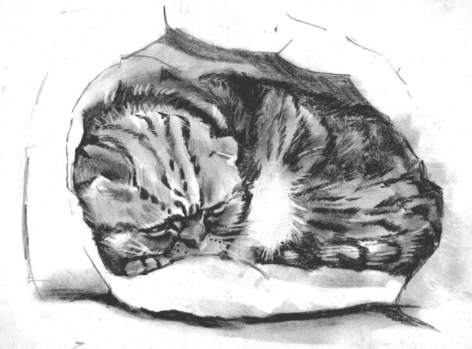 貓(課堂示範)