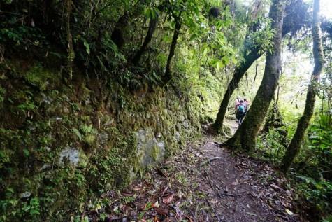 森林內見到石牆結構。