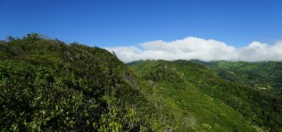 Wa'ahila Ridge Trail