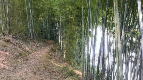 秋香江的 XC 路。