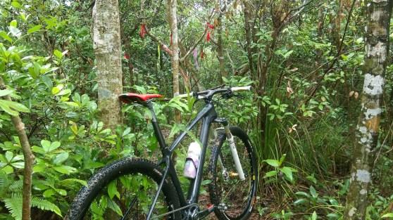 不繼續上山,轉走密林小徑,見超多絲帶的絲帶路。
