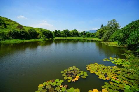 原名「鴨塘灌溉水塘」的山雞湖。