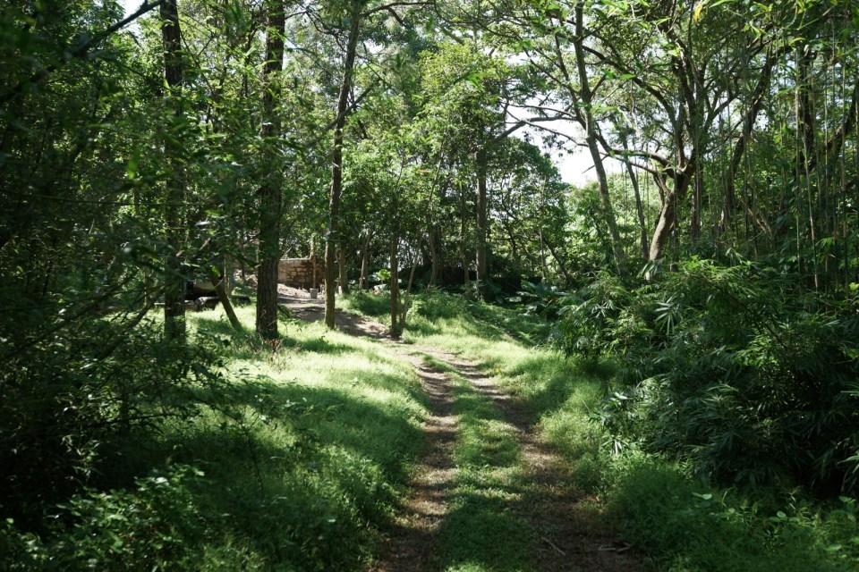 被西園稱為「魔鬼森林」的森林路段,暗斜上,四個髮夾彎。