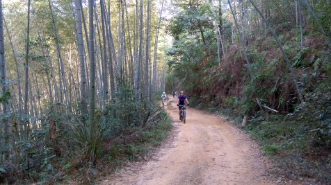 二坑起步後進入茂密的竹林。