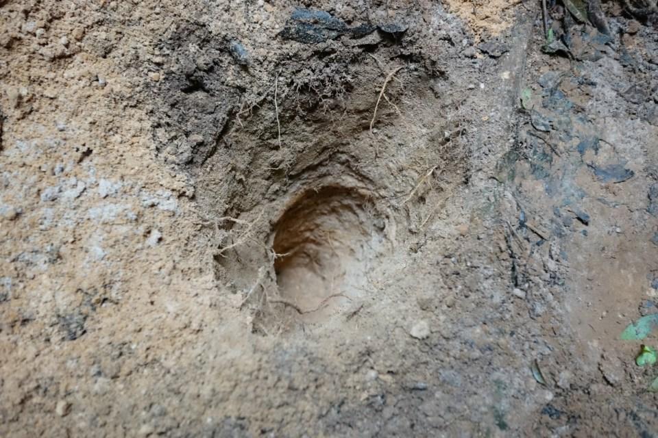 向下挖掘 22 英寸。
