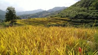 粵湘單車遊 — 五山梯田、鎢礦洞、小桓、九峰、梅樂公路