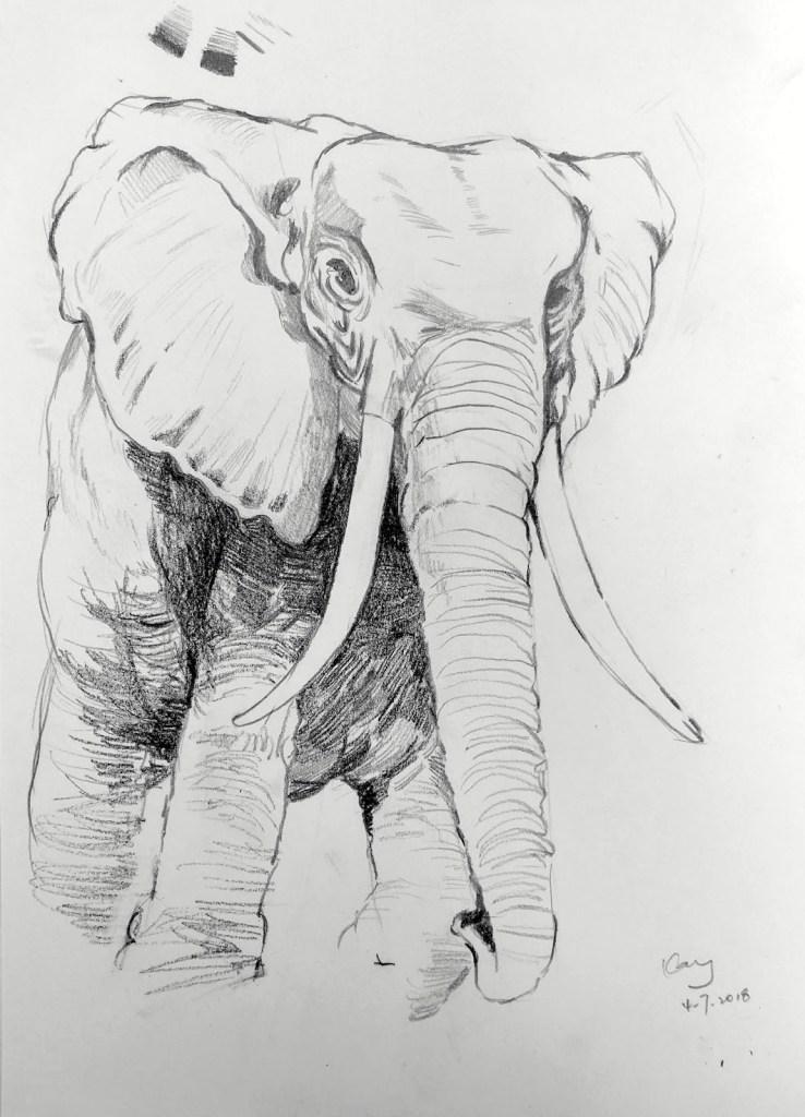 大象(課堂示範)