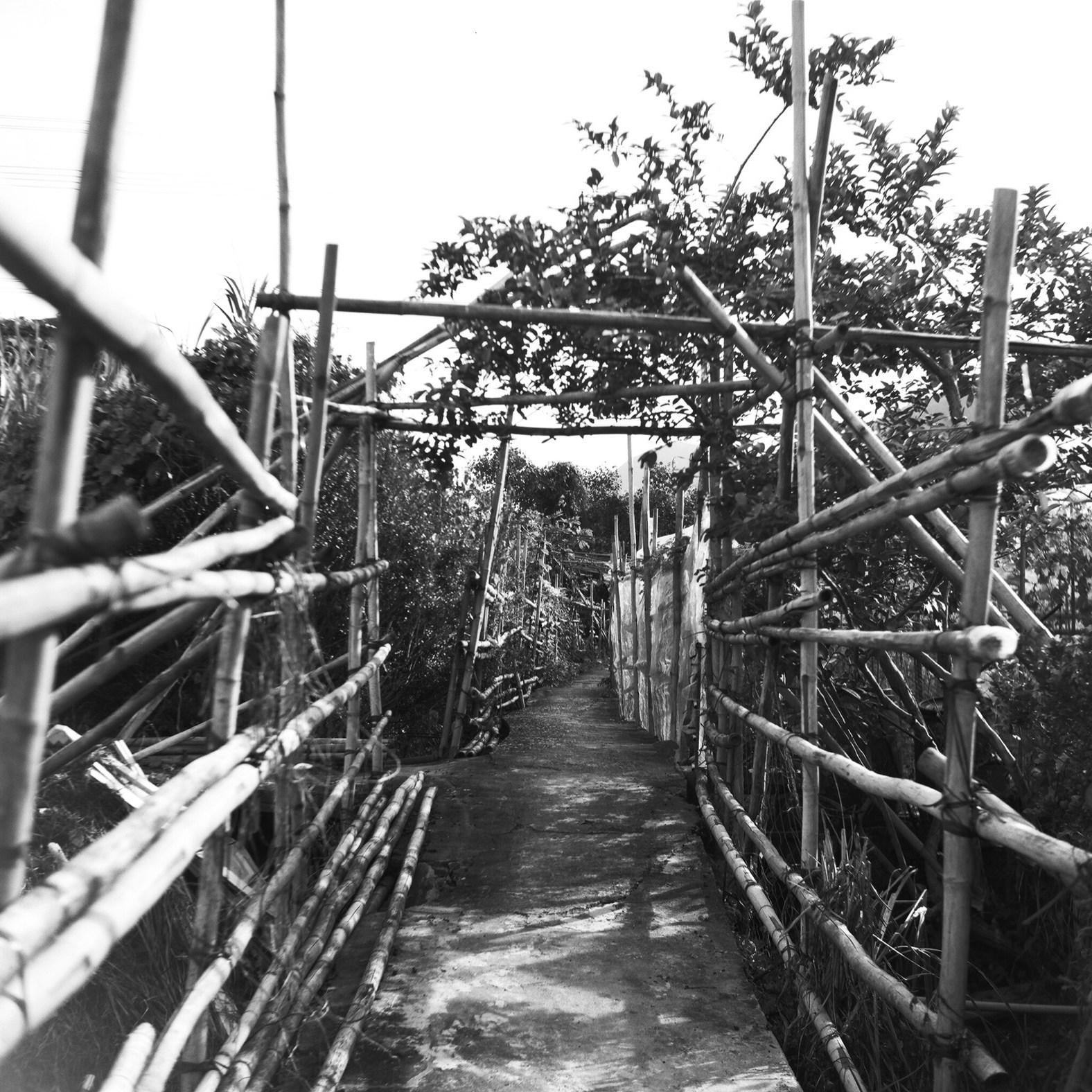 竹棚隧道。
