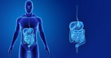اعرف جسمك.. مراحل هضم الطعام داخل جهازك الهضمى