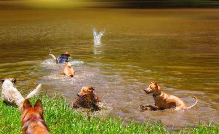 Um-dia-de-cão-Unahy-Foto-Vanessa-Sallesaro-3 Title category