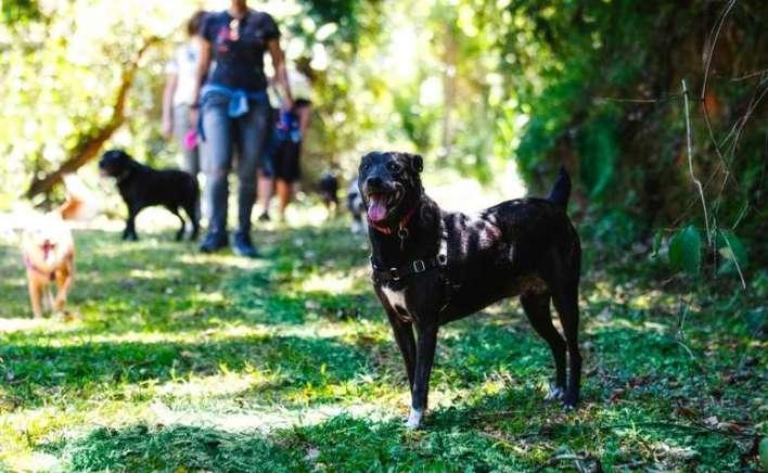 Um-dia-de-cão-Unahy-Foto-Vanessa-Sallesaro-4 Title category