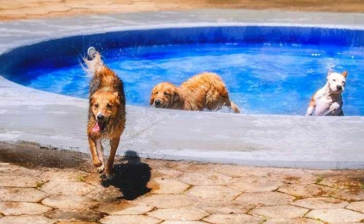 Um-dia-de-cão-Unahy-Foto-Vanessa-Sallesaro-6 Title category