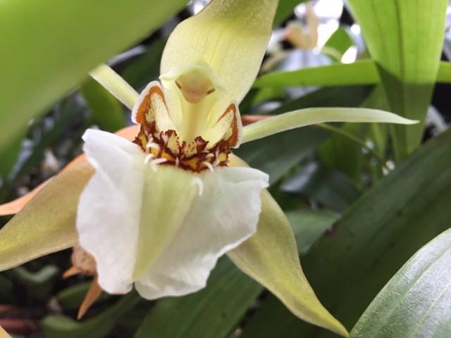 Paixões-botânicas-as-plantas-de-Burle-Marx-e-as-orquídeas-de-Ema-Klabin-Ana-Cristina-640x480 Title category