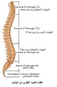 دكتور العمود الفقري في الشيخ زايد