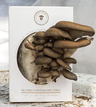 Kit di coltivazione Funghi Espresso
