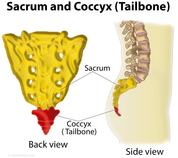 Coccyx