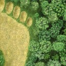 Environmental Impact Assessment Notification, 2006