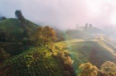EIA 2020: Undermining India's biodiversity and climate goals
